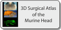 3D Surgical Atlas of the Murine Head