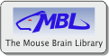 The Mouse Brain Library